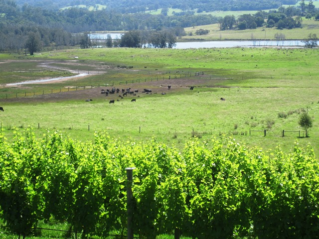 Food trail,foodie,Cuppit's,Restaurant,cupitts restaurant,vineyard,winery