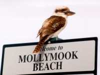 Milton Ulladulla,things to do in Mollymook,Mollymook,Milton,Ulladulla